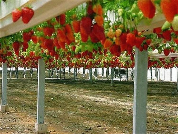 Еврейский колхоз в пустыне. Почему весь мир завален израильскими продуктами