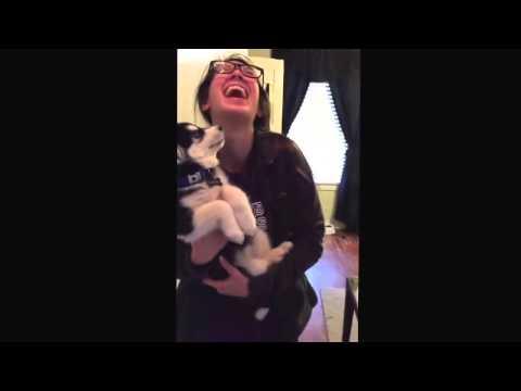 Разговорчивый щенок хаски - посмотрите видео))))