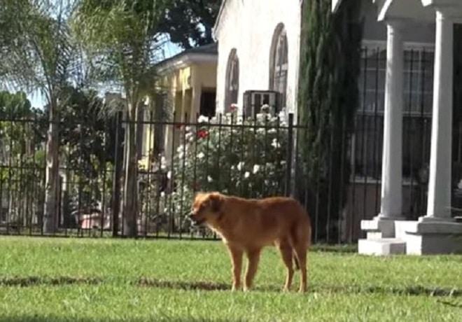 Одинокая собака была слишком испугана, чтобы попросить помощи