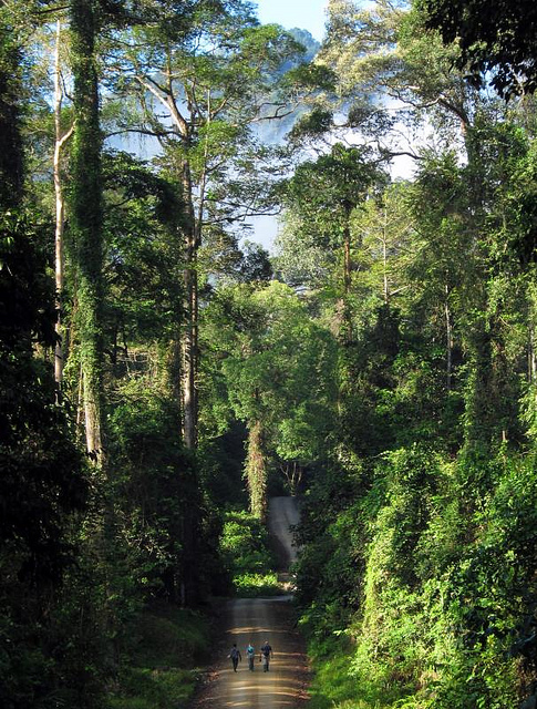 Тропический лес. остров Калимантан. Малайзия. Фото