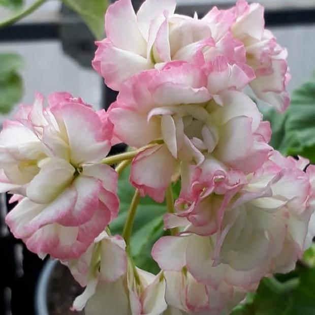 Садовые цветы: самые лучшие растения для красоты двора на даче