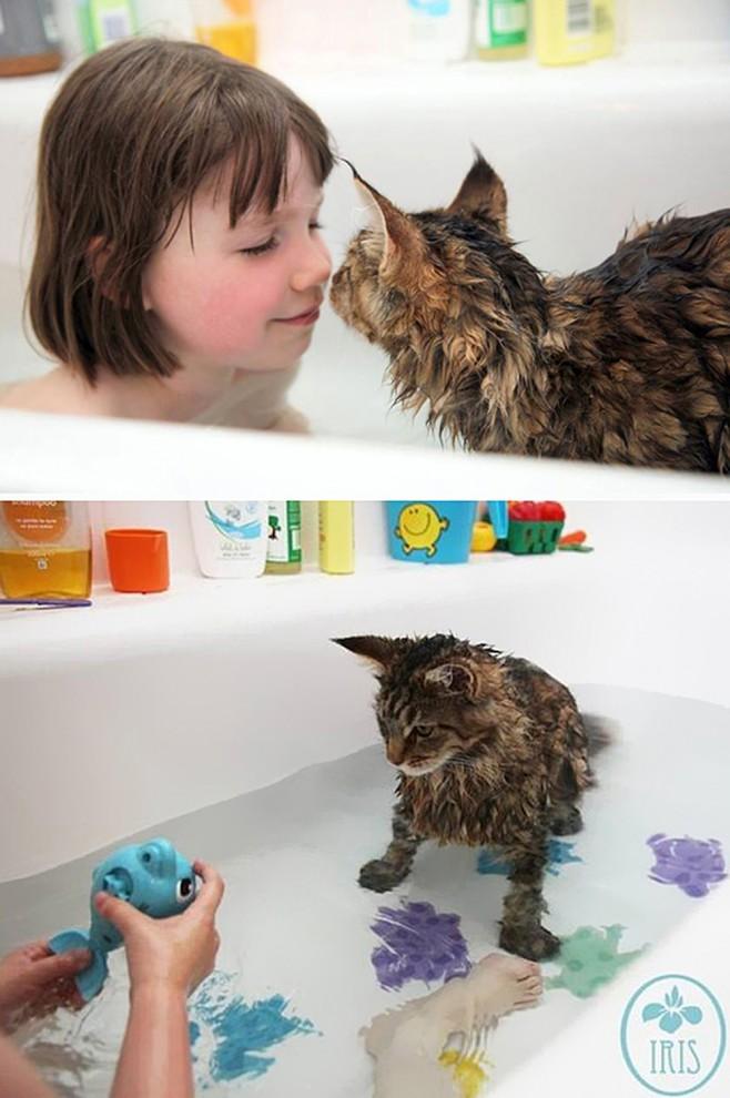 Эти кошки очень любят купаться