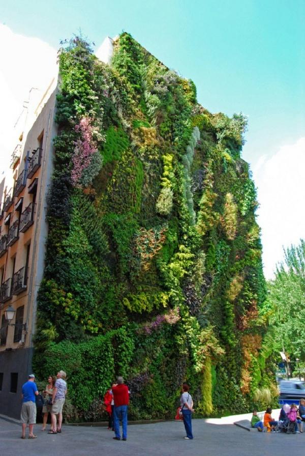 Вертикальное озеленение - для города спасение