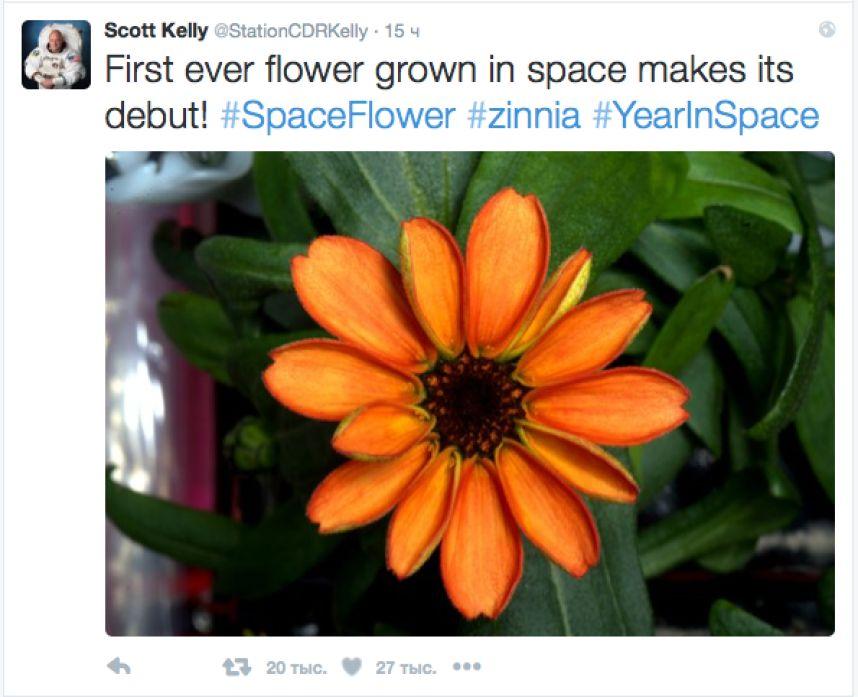 В космосе расцвели цветы!На Международной космической станции (МКС) распустился бутон циннии