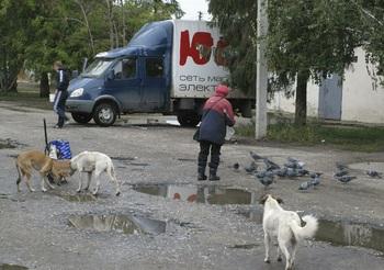 Во время незаконной охоты на бездомных собак догхантер усыпил сам себя