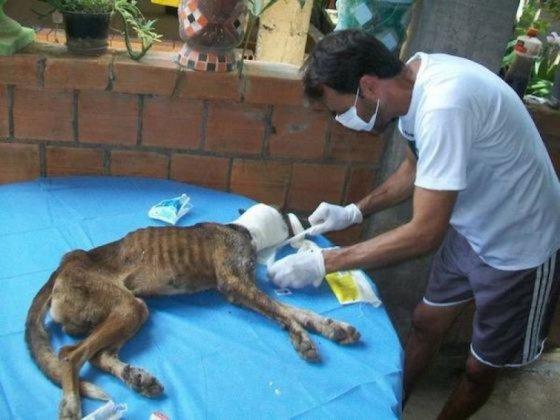 Спасение умирающей бездомной  собаки