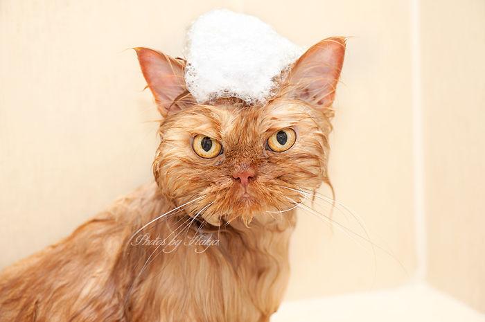 Garfi11 Гарфи, самый сердитый кот в мире