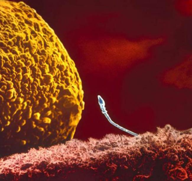 Начало жизни: от зачатия до рождения