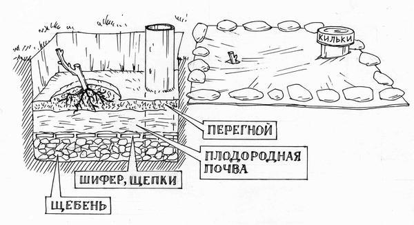Схема устройства ямы для посадки винограда: слева - в разрезе, справа - после заполнения и мульчирования