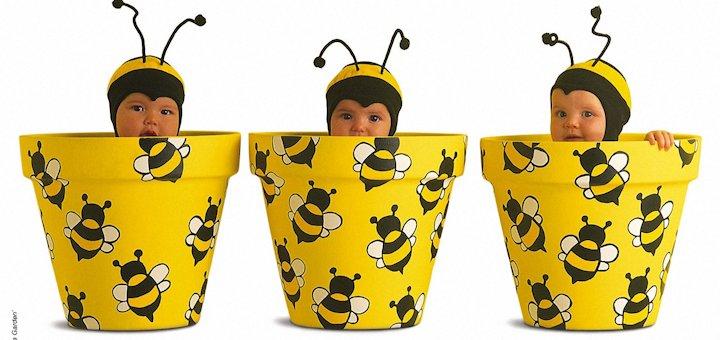 Где пчелы берут воск и зачем нужны тараканы