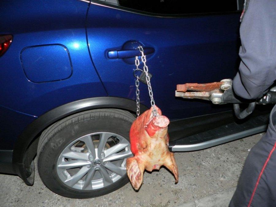 Nissan и свиная голова