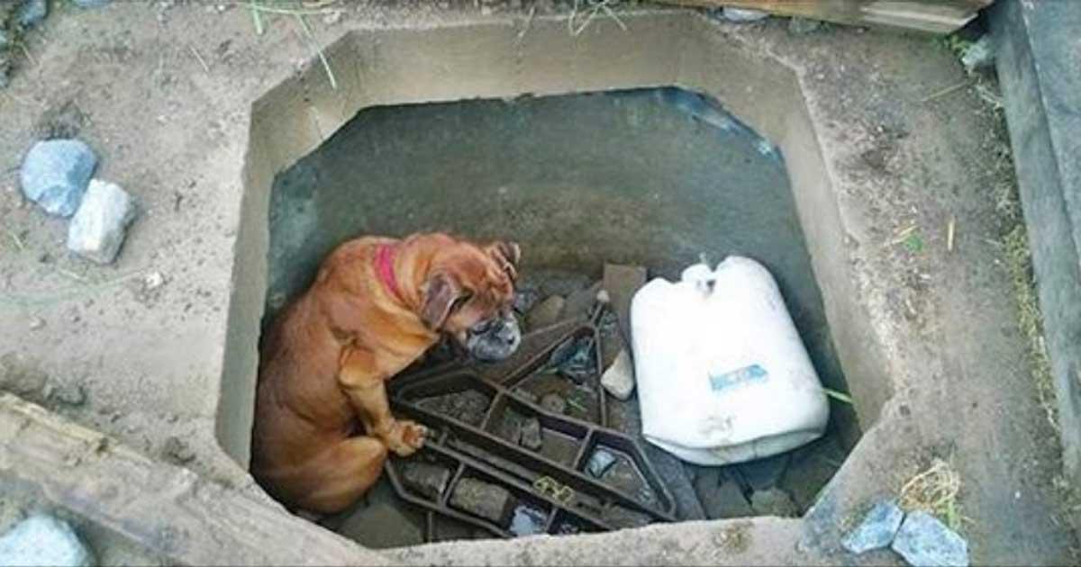 Собака по кличке Белла ждала…