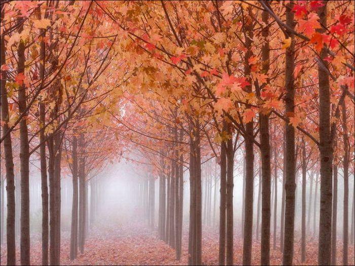 beautiful_fall_in_photos_29 (700x525, 99Kb)