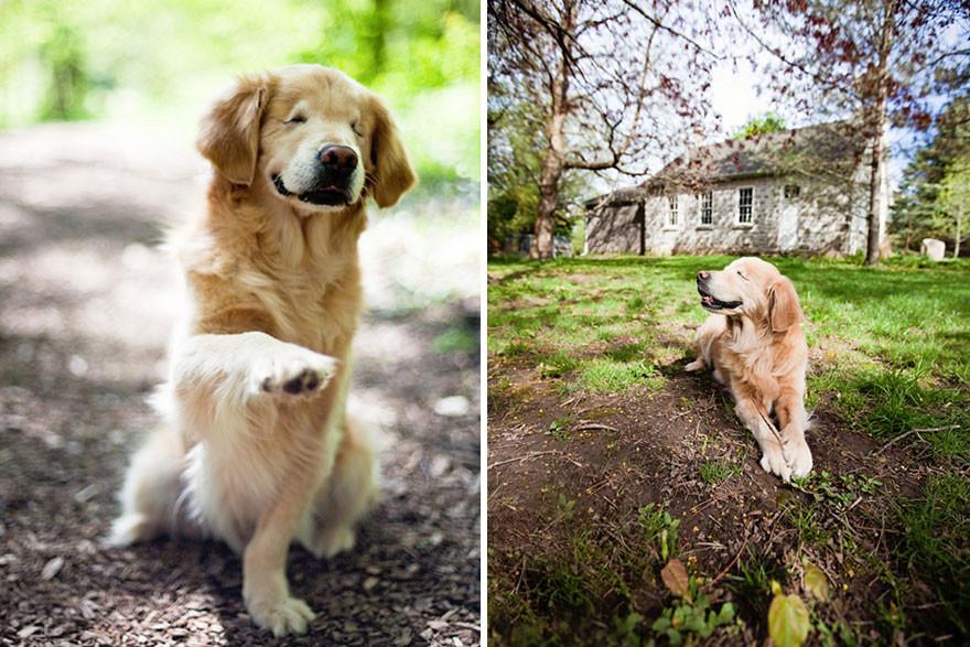 Слепой Смайли, помогающий больным людям помощь, слепота, собака, терапевт