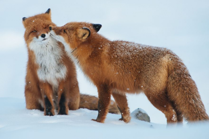 50 сладких парочек животные, любовь, пара
