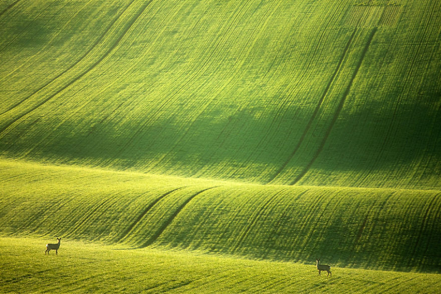 Завораживающая красота моравских полей в Чешской Республике моравия, поле, чехия