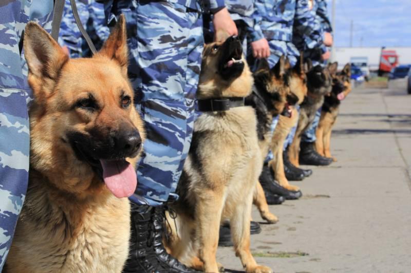 День кинолога. Как в российской полиции появились служебные собаки