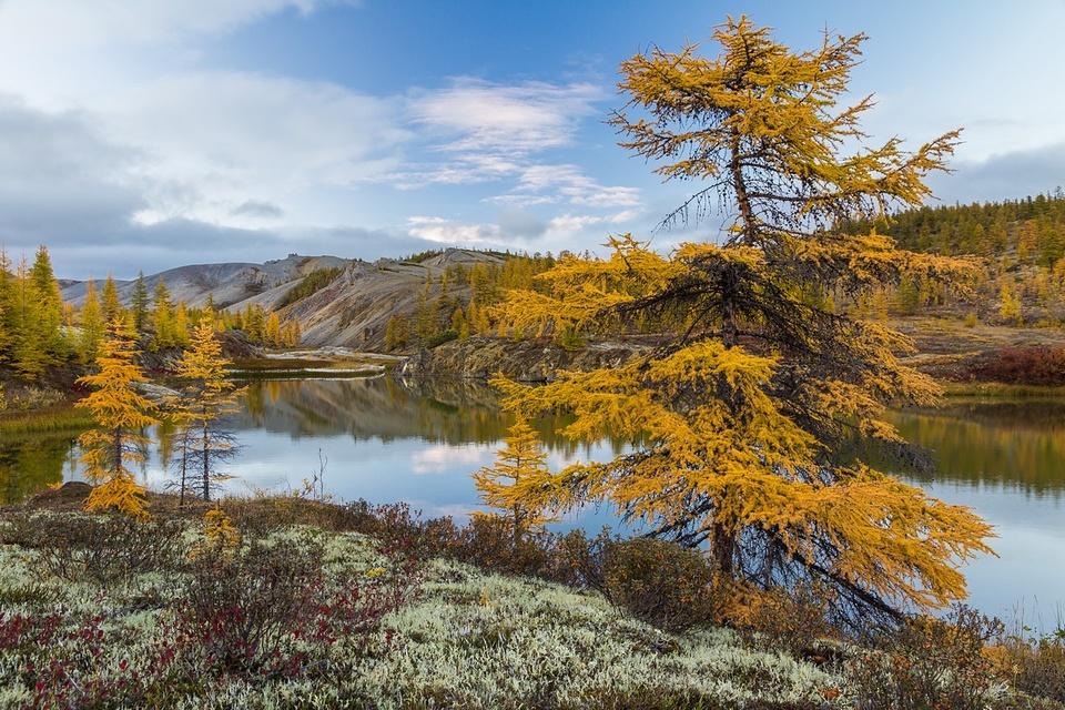 Желтолиственное побережье, Якутия в фотографиях Кирилла Уютнова