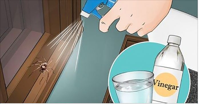 Если вы сделаете эти 6 вещей, вы никогда больше не увидите пауков на своей кухне, ванной или спальне