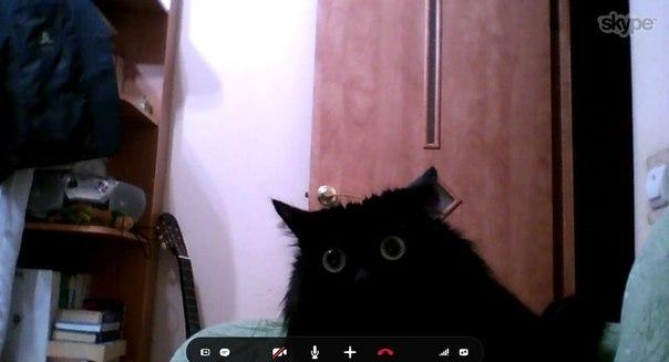 """""""Звонил девушке в скайп, как только она отошла, пришел котейка и вот как он отреагировал на мое """"кыскыскыс"""" со стороны компа"""""""