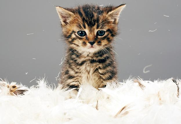 23 полезных лайфхака для хозяина кошки