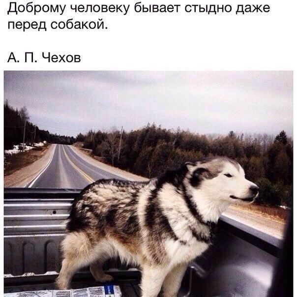 Доброму человеку бывает стыдно даже перед собакой...
