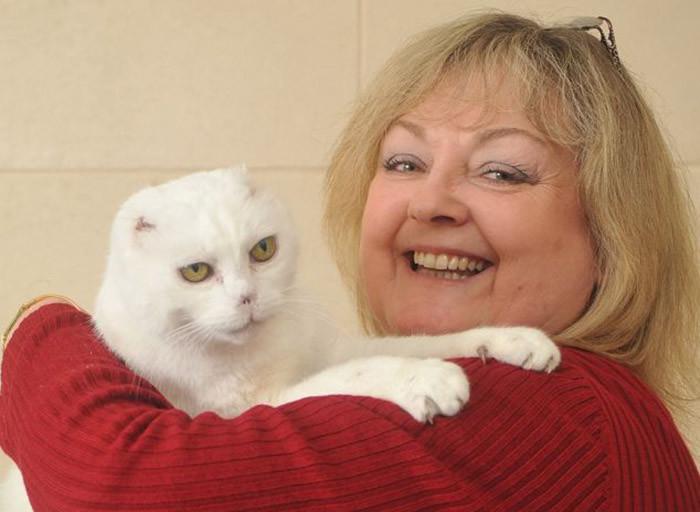 Этого кота не хотят брать из приюта из-за сходства с Волан-де-Мортом волан де морт, животные, кот