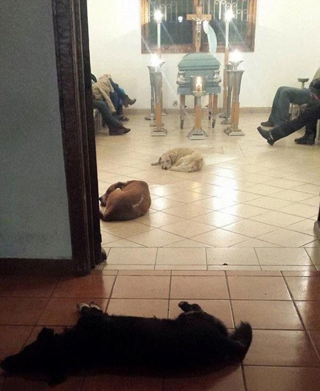 Бездомные собаки пришли на похороны женщины, которая их кормила, чтобы попрощаться с умершей