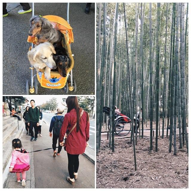 Поводок для детей, коляска до собак, все смешалось в моей голове... в мире, люди, прикол, япония