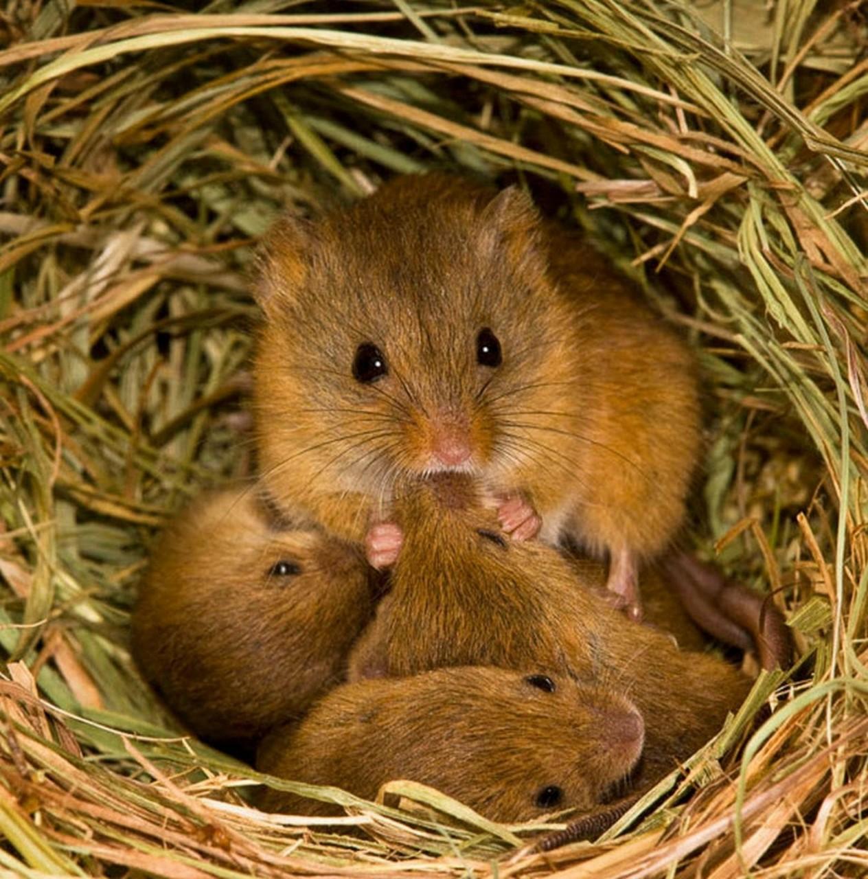 Тайная жизнь мышей в поисках кормешки.... . Обсуждение на LiveInternet - Российский Сервис Онлайн-Дневников