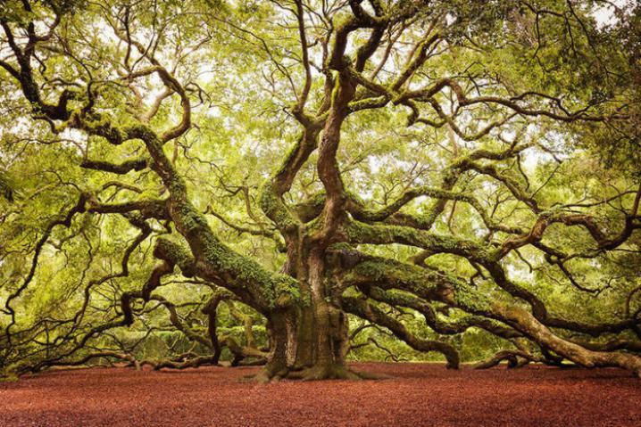 Какое дерево - ваш защитник в этом мире? Зависит от дня рождения!