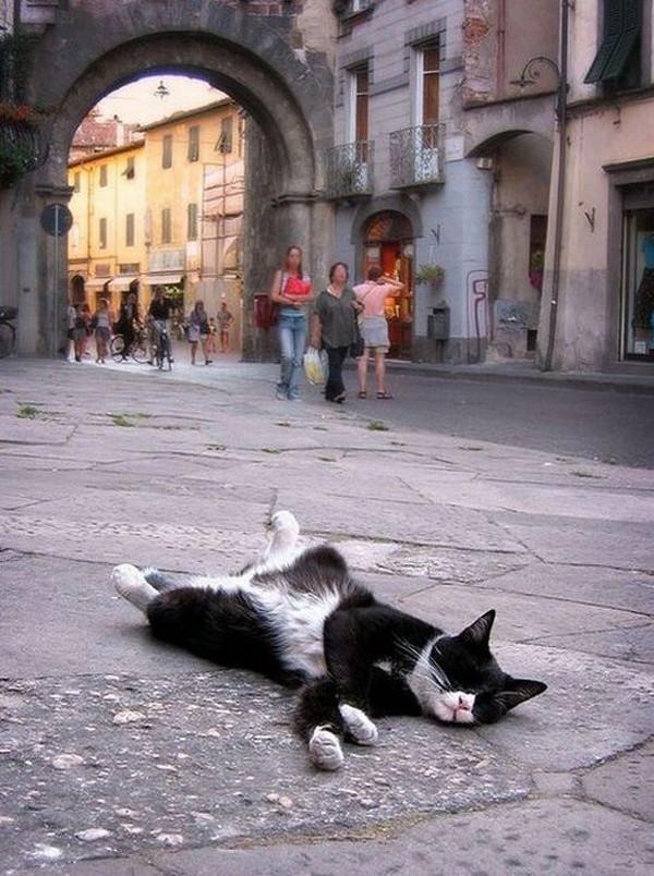 sleepingcats31 Коты, познавшие науку сна