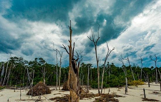 Изменение климата — прямая у…