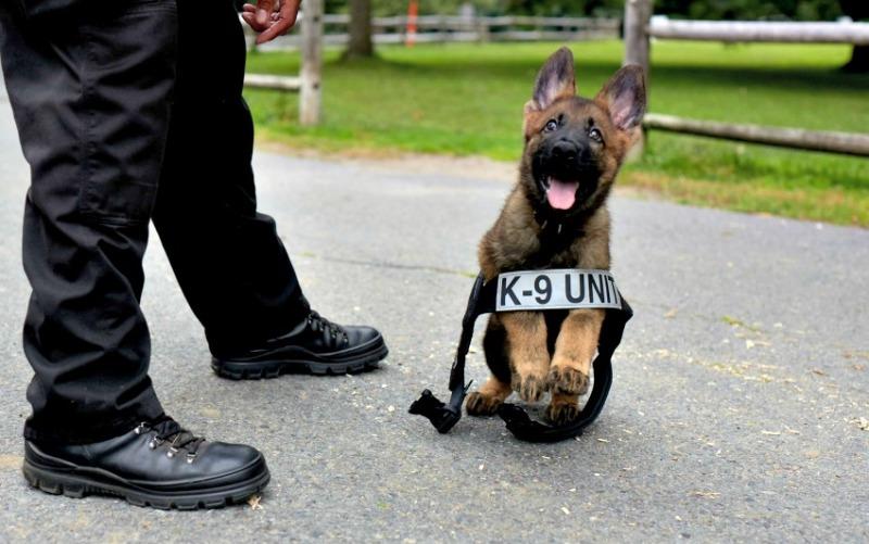 5 главных правил полицейской собаки