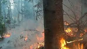 Чем опасны гарь и дым для человека