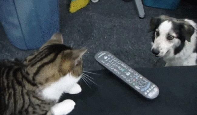 20 котов, которые знают, кто в доме хозяин