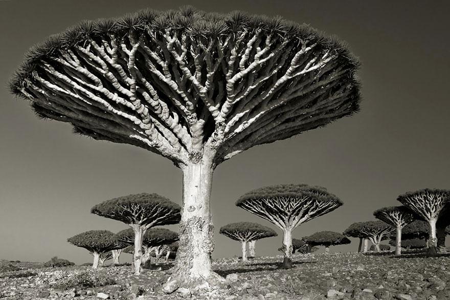 Деревья древние как мир в фотографиях из 14-летнего путешествия-9