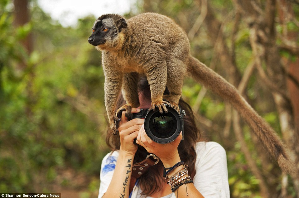 Brave girl-the photographer easily finds common language with wild animals 04
