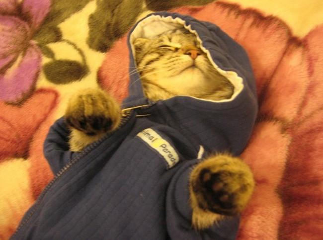 Спящий жучок кардиган, кот