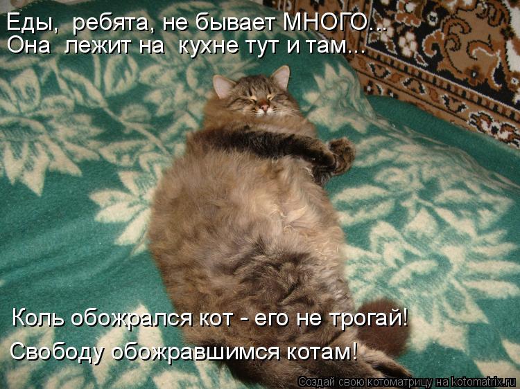 Котоматрица: Свободу обожравшимся котам! Коль обожрался кот - его не трогай! Еды,  ребята, не бывает МНОГО... Она  лежит на  кухне тут и там...