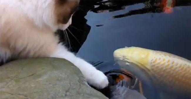 Кажется, этот кот охотится на рыбок, но на самом деле…