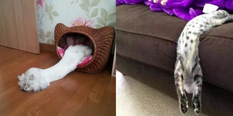 20+ кошек, доказывающих, что…