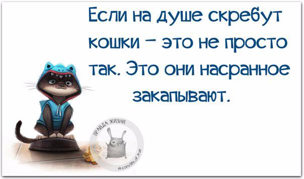1432150752_frazki-5 (604x356, 144Kb)