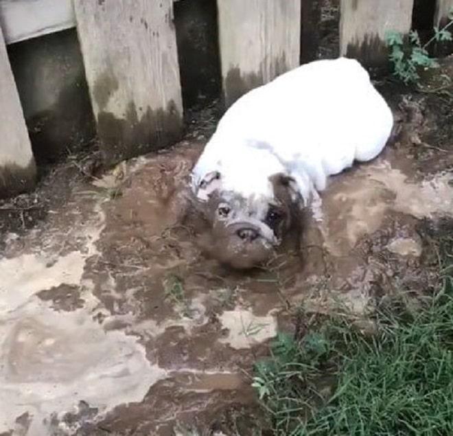 «Стой, грязнулька»: женщина сделала смешное видео собаки в грязи, но упустила важный момент
