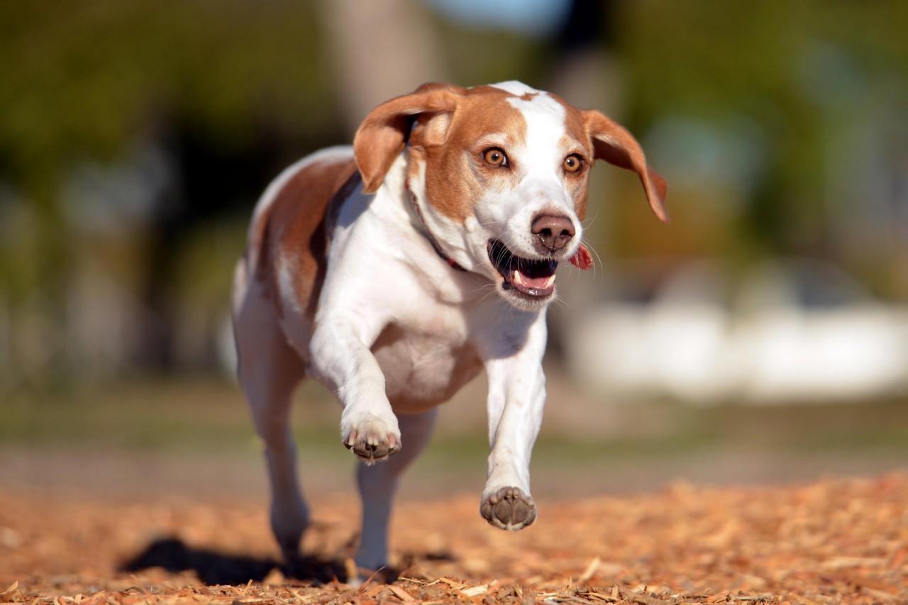 Подборка фото собак на четверг