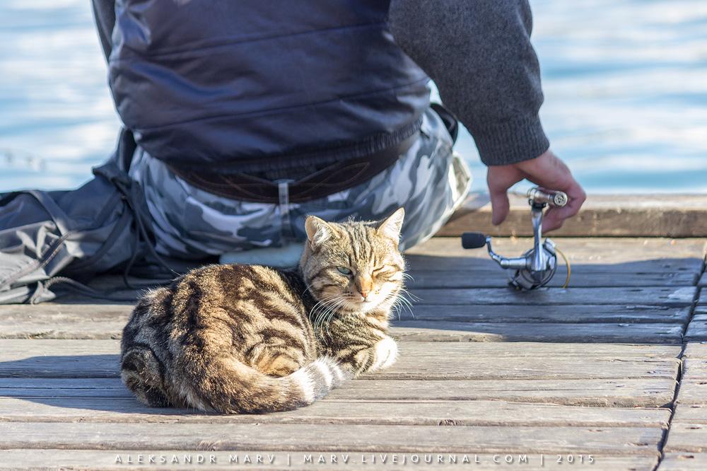 Чем кошки могут быть лучше котов?