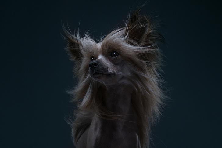 Фотографы из Москвы сделали серию выразительных портретов, на которых запечатлели характер собак разных пород