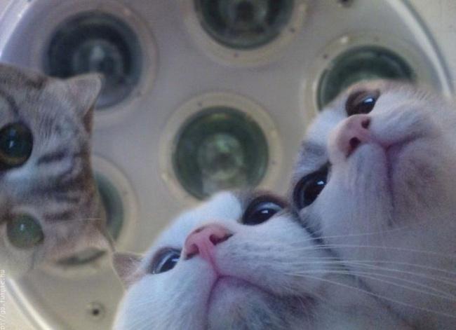 30 котиков, в существование которых сложно поверить