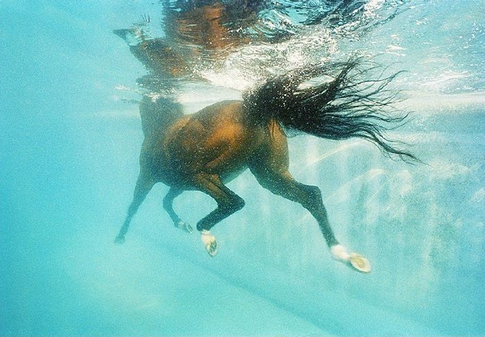 Фотограф Tim Flach, серия «Equus»