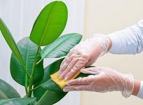 Ошибки ухода за комнатными растениями